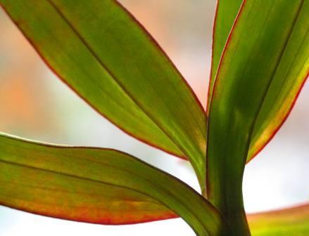 orchidleaves2.jpg